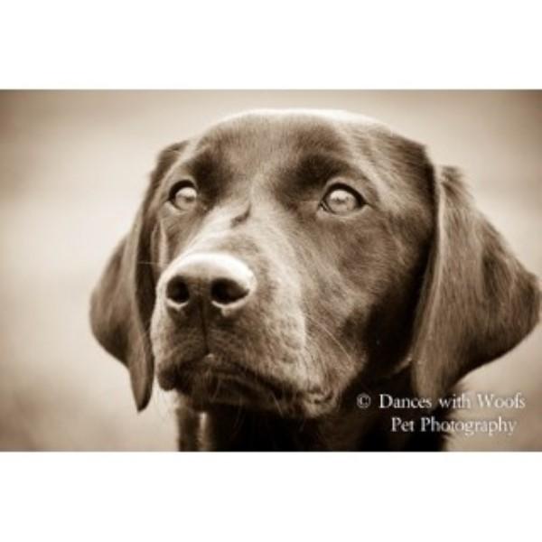 Dog Training Daventry