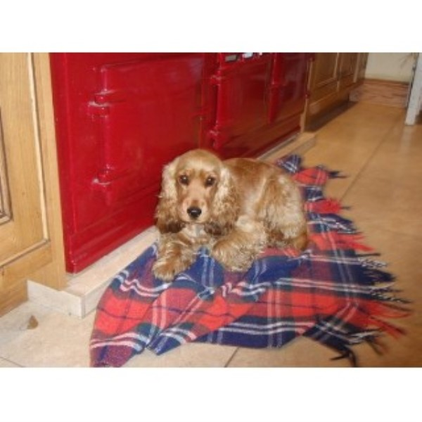 Dog Home Sitters Cheshire