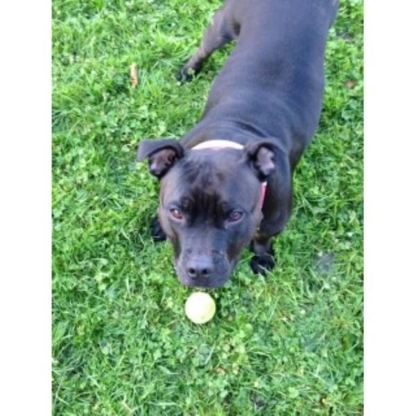 Dog Day Care Witney