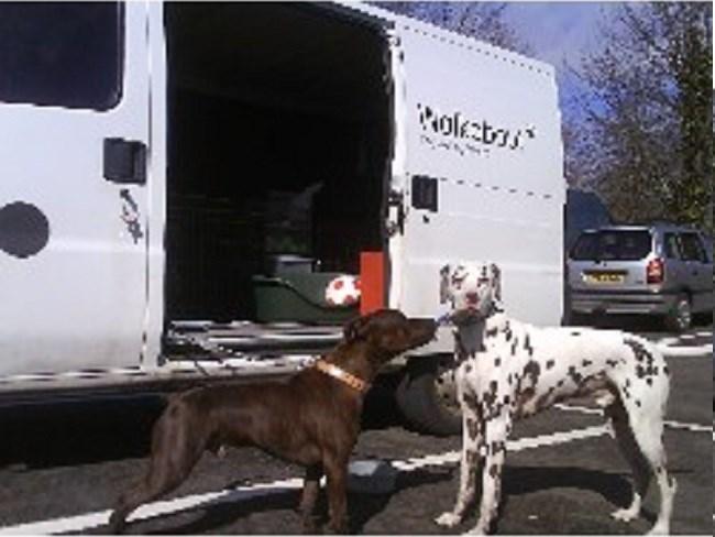 Dog Training Ayrshire