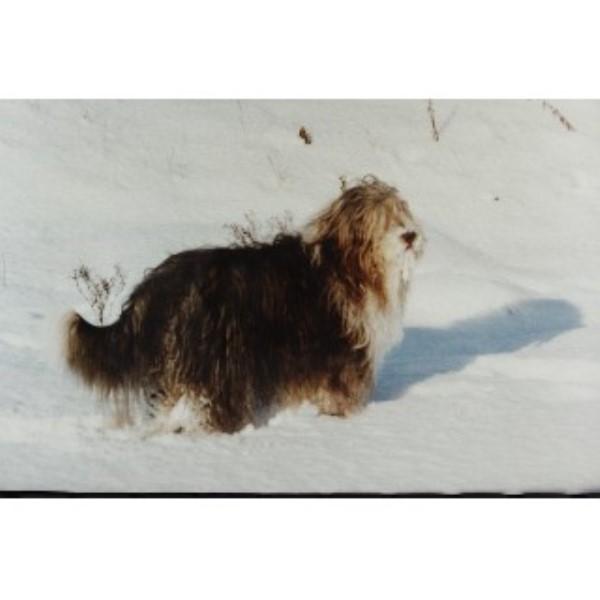 Dog Walking Areas North Ayrshire