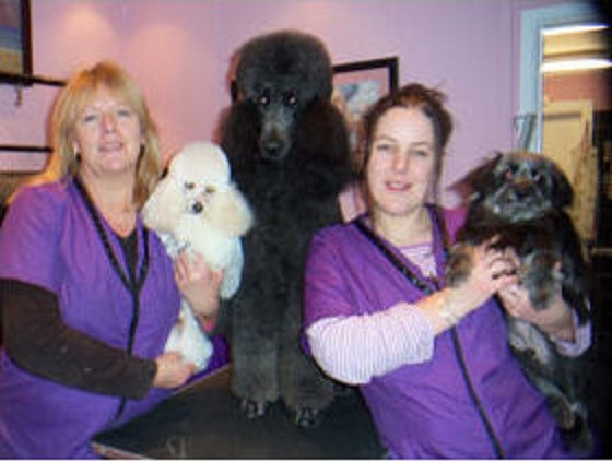 The lady the tramp grooming salon spa gloucester for A t tramp salon