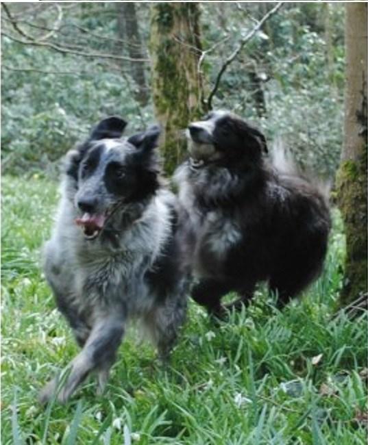 Dog Walking Areas Taunton