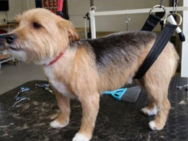 Dog Walking Sandy Bedfordshire