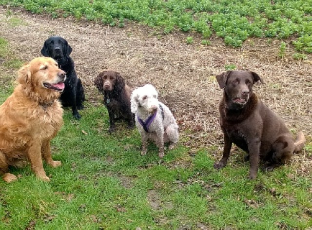 Dog Training Bicester