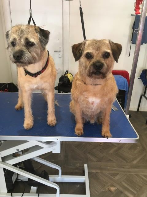 Buddys Dog Grooming & Microchipping