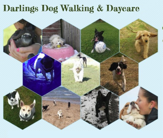 Dog Walking East Lothian Review