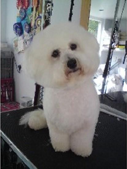 Best Dog Breed That Co Not Bark Uk