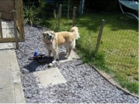 Complete Pets dog boarding services in Chesterfield, Derbyshire