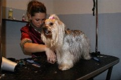 Mobile Dog & Cat Grooming  Woking Surrey Logo