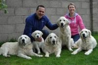 Dog Home Boarding Swansea