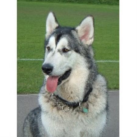 Dog Kennels In Port Glasgow