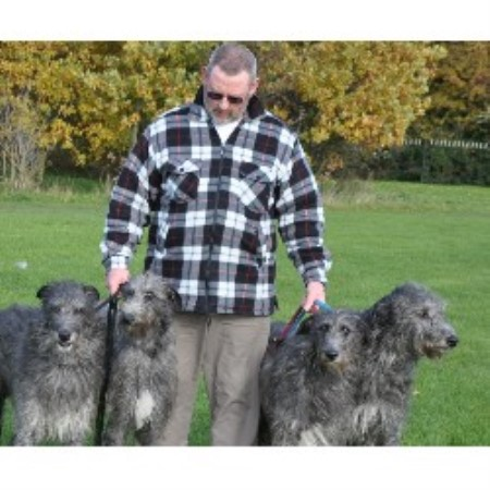 Scottish Deerhound breedering kennel in Redditch