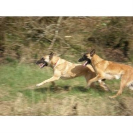 Dog Training East Lothian
