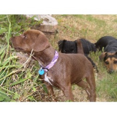 Patterdale Terrier breeder Exeter 16653
