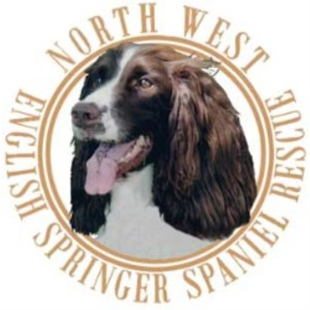 Nwessr, North West English Springer Spaniel Rescue Shelter Club