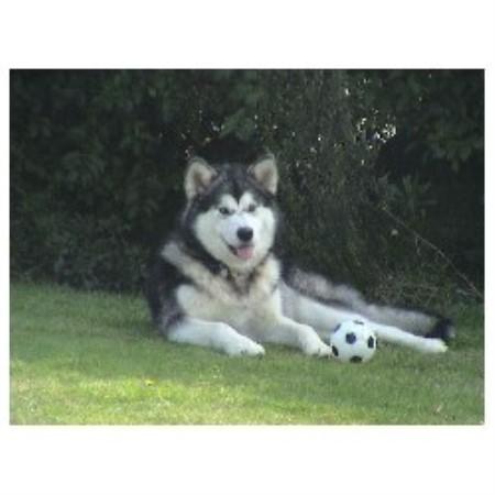 Family Dog Rescue Club Newport