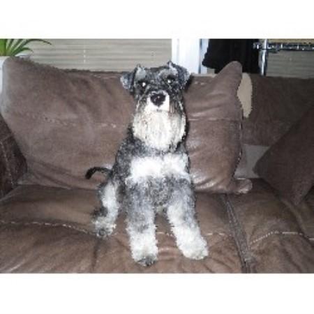 Dog Rescue Greenock