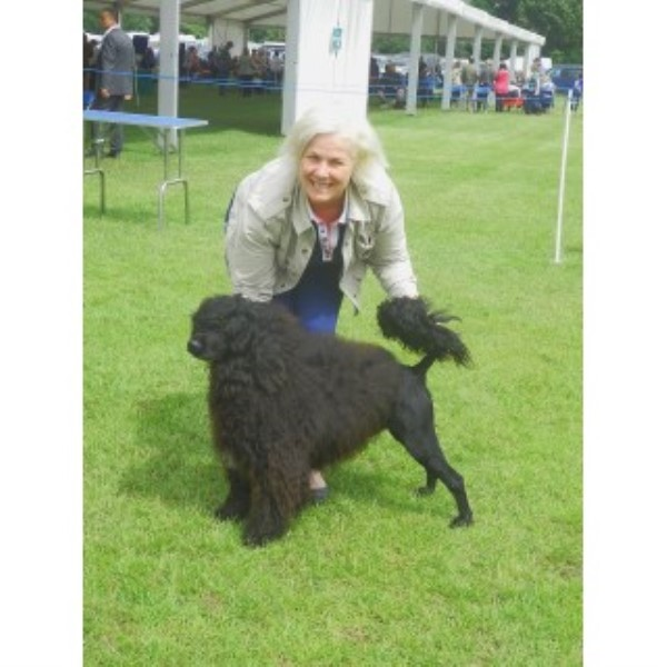 Portuguese Water Dog Breeder in East Yorkshire