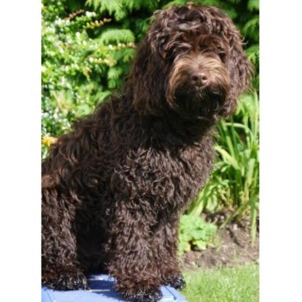 Dog Rescue Aberdeenshire Scotland