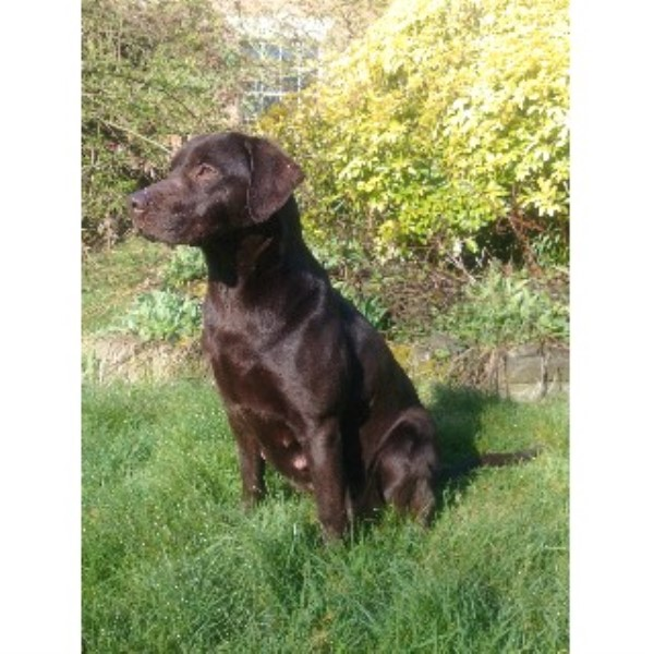 Kennel Club Dog Trainers In North East England