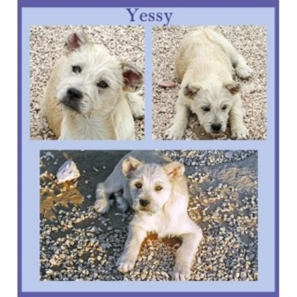 Yessy & Yona, Two 3 ½ Month Old Crossbreed Sisters – Dog And Cat Friendly (Stroud, Gloucestershire)